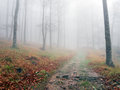 Pathway in autumn beech forest with fog Stock Photos