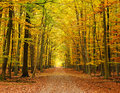 Pathway in the autumn forest Stock Photo