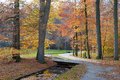 Pathway in the autumn forest holland Stock Images