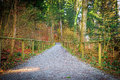 Pathway in autumn forest switzerland Stock Photo
