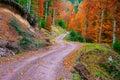 Pathway Through The Autumn For...