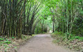 Pathway in bamboo forest Royalty Free Stock Photos