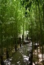 Pathway through bamboo forest wooden a Stock Photo