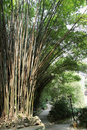 Pathway with bamboo in park Royalty Free Stock Image