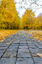 Pathway through colorful yellow fall woodland Royalty Free Stock Photo