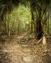 Pathway into the forest Stock Images