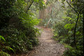 Pathway through the forest Royalty Free Stock Photo