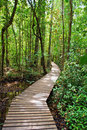 Pathway in the forest Royalty Free Stock Photography