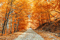 Pathway in the forest colorful autumn Stock Photo