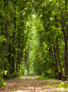 Pathway in the forest lane through maple morning Royalty Free Stock Photos