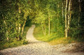 Pathway through a green forest Royalty Free Stock Photo