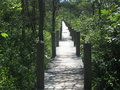 Pathway in green wood Stock Photography