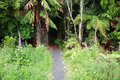 Pathway leading into jungle Royalty Free Stock Photography