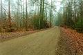 Pathway Through The Misty Autu...