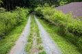 Pathway On Mount Batulao, Phil...