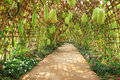 Pathway with plant tunnel in the garden Stock Photo