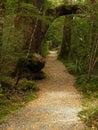 Pathway in rainforest, Fiordland Stock Images