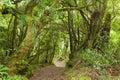 Pathway through rainforest te urewera national park north island new zealand Royalty Free Stock Image