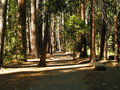 Pathway of shadows minolta digital camera path through forest trees with afternoon sun Royalty Free Stock Photo
