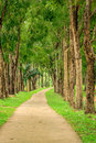 Pathway with tall tree park and Royalty Free Stock Photos