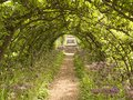 Pathway to bench beneath leafy arch Royalty Free Stock Photo