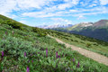 Pathway towards the Never Summer Mountains in Colorado Royalty Free Stock Photo