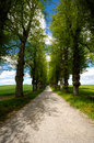 Pathway with trees on boath sides taken at summer time Stock Photos