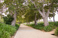 Pathway through trees paved path on warm day Royalty Free Stock Photos