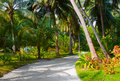 Pathway in tropical park Royalty Free Stock Photo