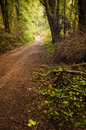 Pathway in the woods fall scenery with a beautiful forest hills Royalty Free Stock Images