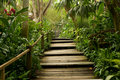 Pathways in the jungle Royalty Free Stock Photo