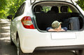 Patient little boy ready to leave on holiday sitting with his head resting his arms in the open back of a hatchback car with Stock Photo