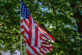 Patriotic American flags standing in front of trees in park Royalty Free Stock Photo
