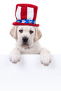 Patriotic dog sign labrador puppy holding or banner Stock Photo