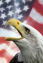 Patriotic Symbols - USA - Eagle Royalty Free Stock Photo