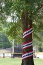 Patriotic Tree Royalty Free Stock Photo