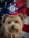 Patriotic Yorkie Dog with hat and Flag background, red white and blue Royalty Free Stock Photo