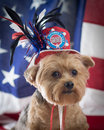 Patriotic yorkie dog in top hat in memory of september wearing a red white and blue with a flag background vertical Royalty Free Stock Photos