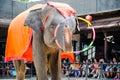 Pattaya, Thailand :  Elephant dance hula hoop show. Royalty Free Stock Photo
