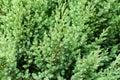 Pattern Of Beautiful Green Jun...
