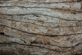 Pattern of beautiful wood texture nature background Stock Images