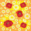 Pattern with chamomile and poppies Stock Images