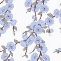 Pattern with elegant sakura flowers