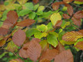 Pattern of fall leaves Royalty Free Stock Photo