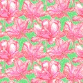 Pattern with field of bright peony flowers vintage vector on green background seamless texture for print wallpaper spring summer Stock Image