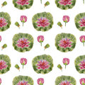 Pattern flower lotus with a on a white background Stock Photography