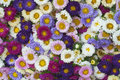 Pattern of flowers of different colors Royalty Free Stock Image