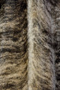 Pattern for fur feather and in natural color and texture as background and texture Stock Image