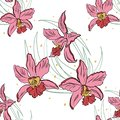 Seamless pattern of pink orchids on a white background