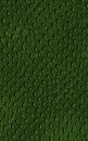 Pattern of green crocodile skin Royalty Free Stock Image